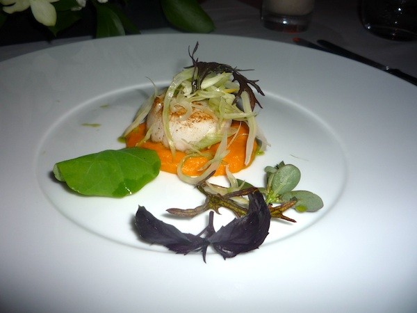 Scallop on carrot puree